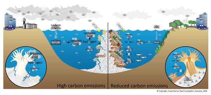 10 justifications ocean acidification is a serious concernOcean Ecosystem Diagram